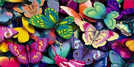 borboletas_e_cores